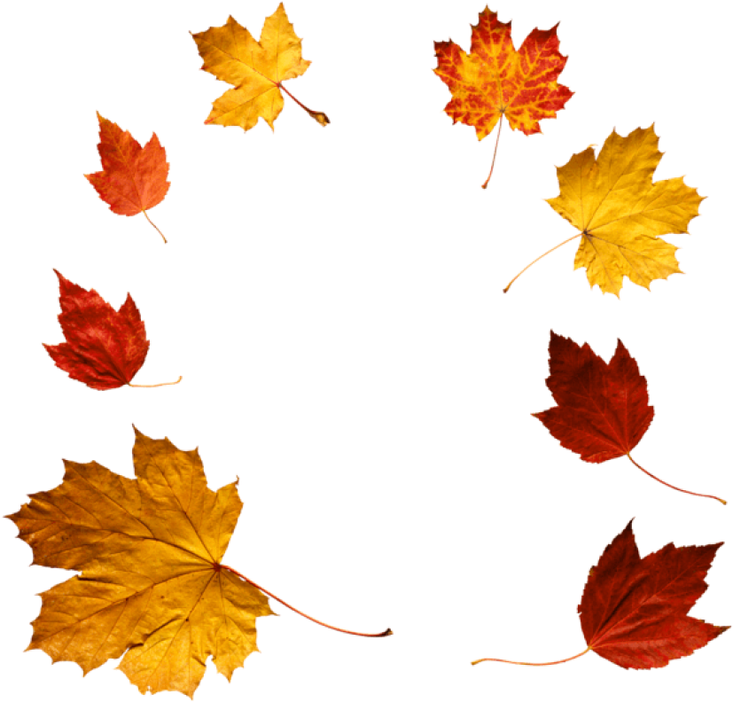 Free Png Download Autumn Leaves Clipart Png Photo Png - Autumn Leaves Real Png Transparent Png (850x812), Png Download