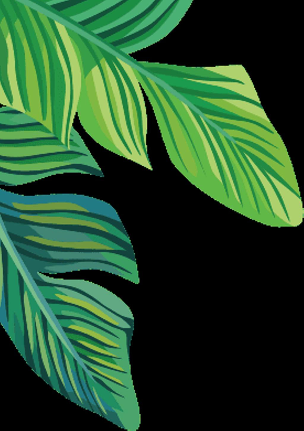 Tropical Plants Banana Leaves Freetoedit - Banana Leaf ...