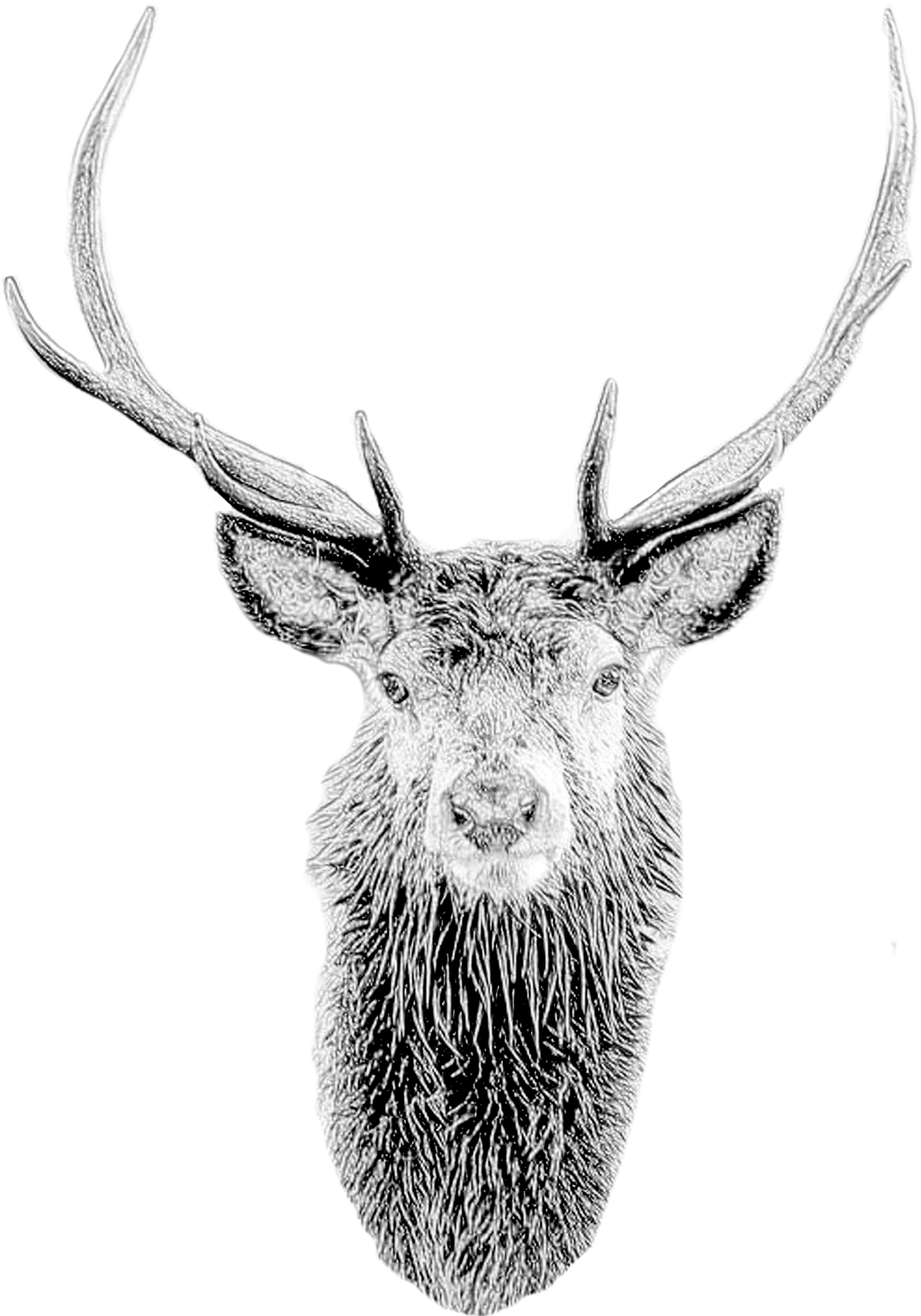 Deer Mask Deer Head Stag Mask Printable Diy Pdf Template Sketch Clipart Large Size Png Image Pikpng
