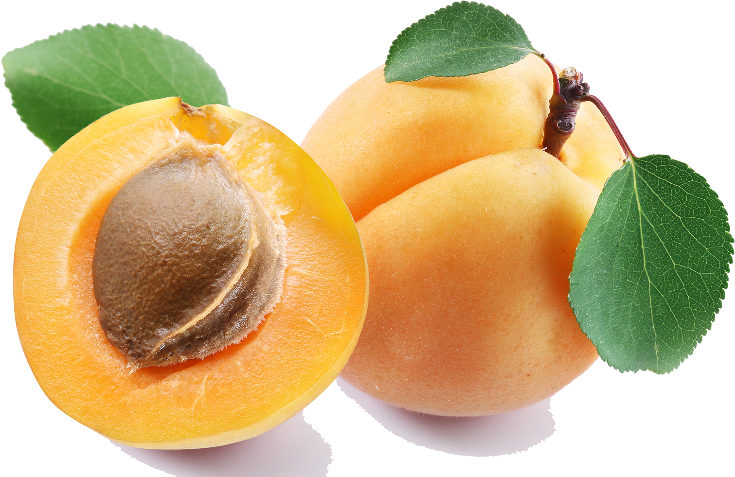 Top 18 Apricot Png Transparent - Apricot Png Clipart (1600x1032), Png Download