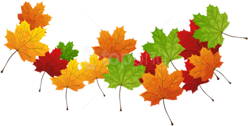 Free Png Download Fall Transparent Leaves Clipart Png - Transparent Pictures Of Leaves (850x465), Png Download