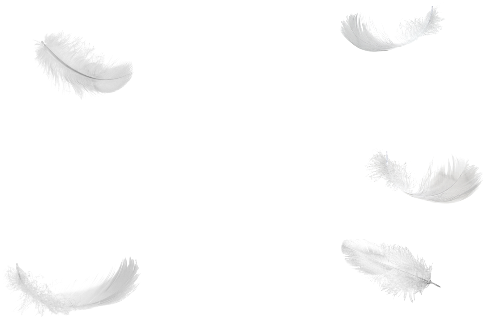 1495816576five Feathers Falling No Background Png - White ...