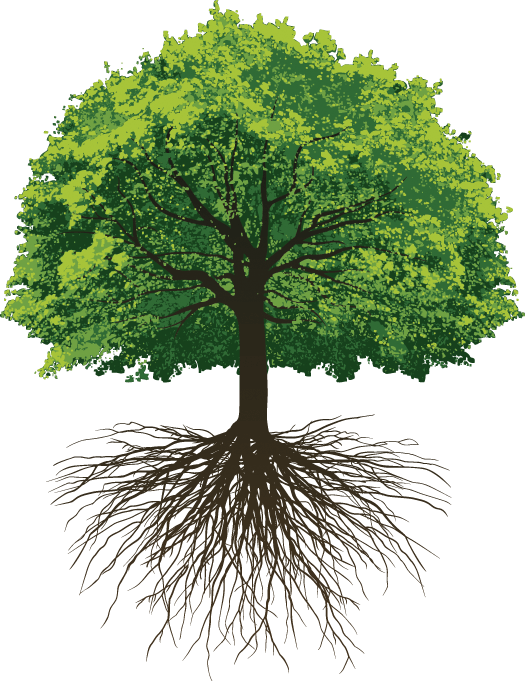 Download Great Oak Roots - Oak Tree With Roots Png Clipart ...