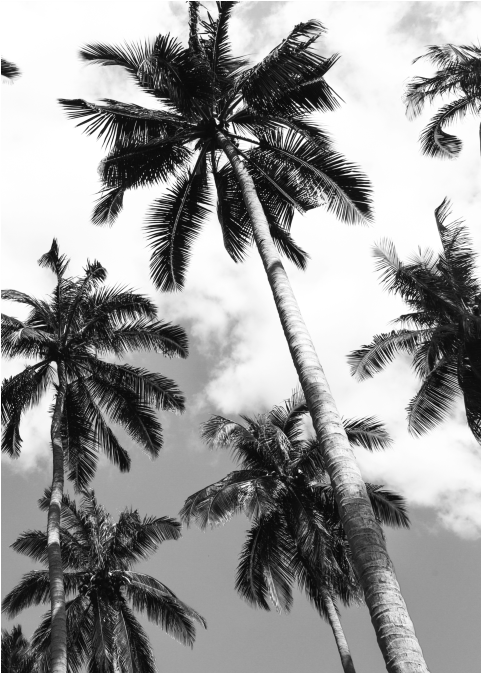 Palm Ii - Attalea Speciosa Clipart (672x672), Png Download