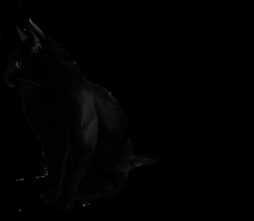 Cat Black Smoke Blacksmoke Animal Blackandwhite Halloween Wallpaper Iphone Cat Clipart Large Size Png Image Pikpng