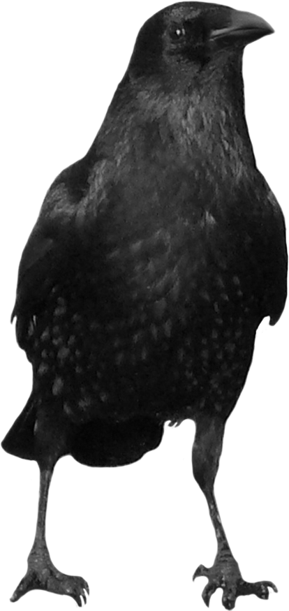 Crows Clipart (414x875), Png Download