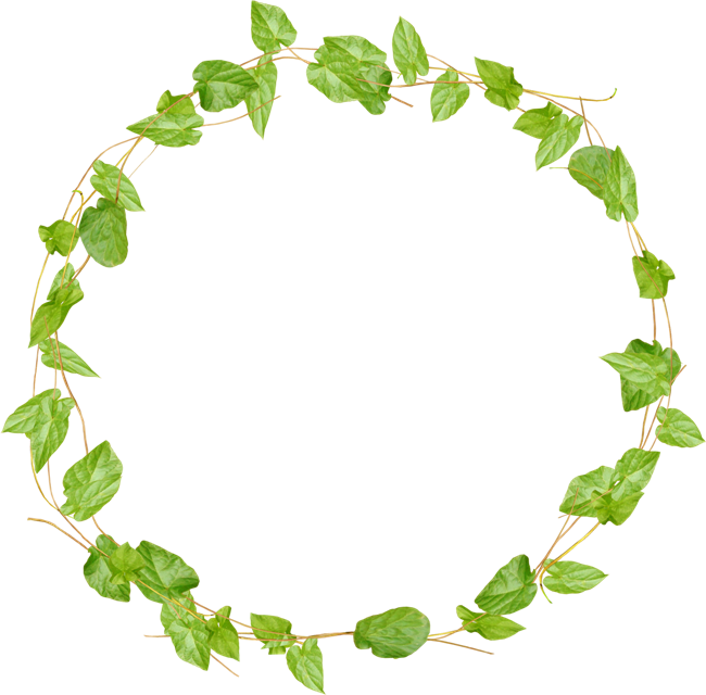 Vine Border, Vines, Photoshop, Frames, Charts, Green, - Cherries Ftu Cluster Png Clipart (650x640), Png Download