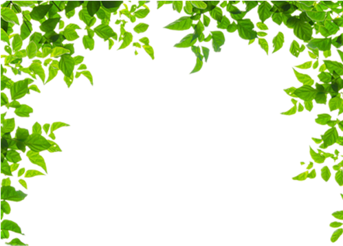 And Leaf Leaves Green Frames Borders Border Clipart - Green Leaves Border Png Transparent Png (500x666), Png Download