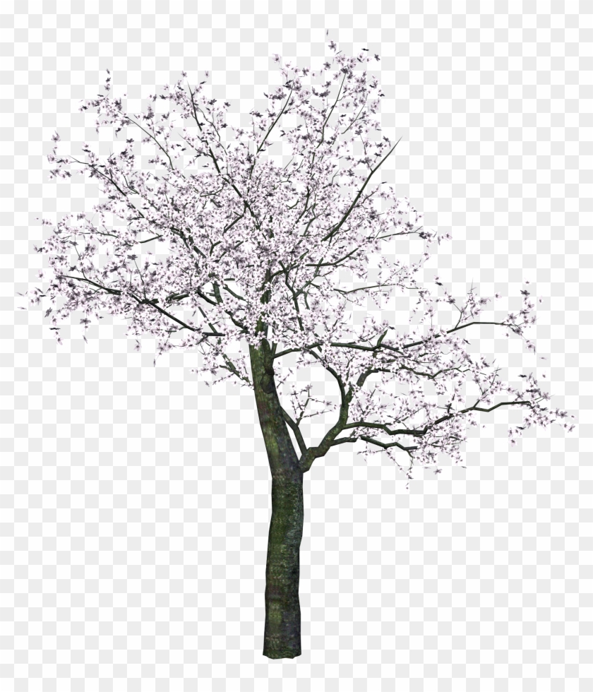 Cherry Blossom Tree Png Clipart #6330