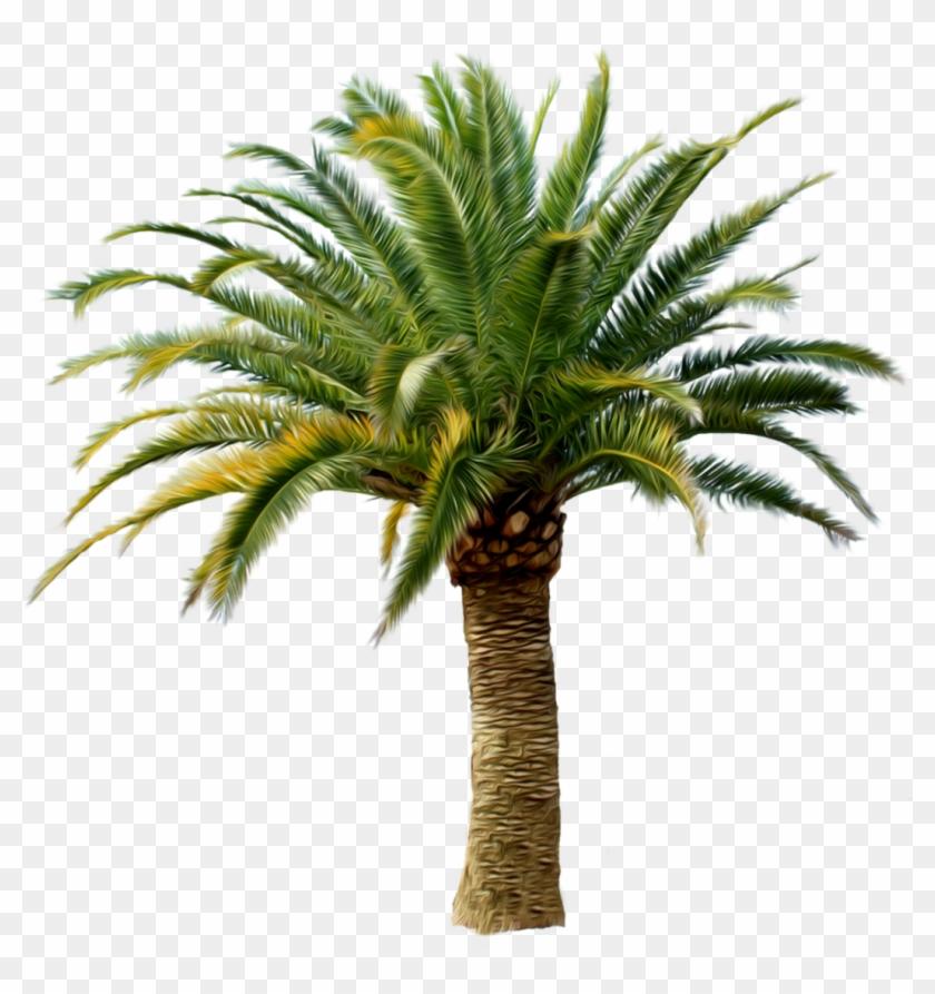 Transparent Palm Tree Png Clipart #6835