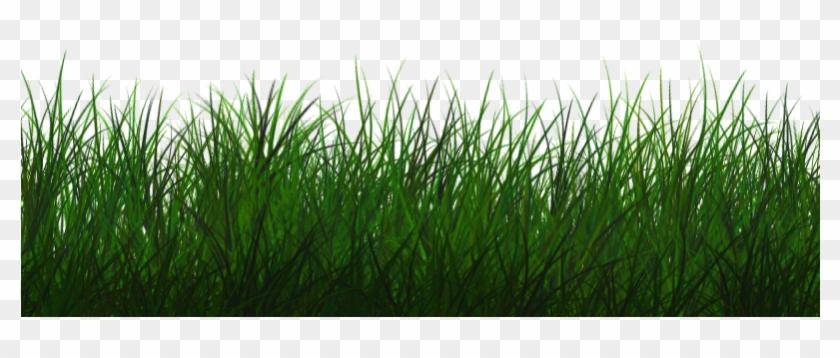 Free Transparent Grass Texture Seamless Png - Grass Photoshop Clipart@pikpng.com