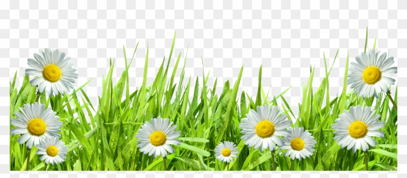 Grass And Flowers Png Clipart@pikpng.com