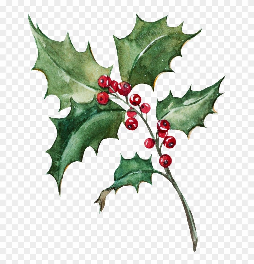 Holly Leaf Png - Holly Painting Png Clipart #1007177