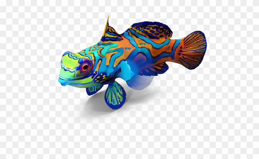 Fish Png Image Transparent Background Mandarin Fish No Background Clipart 1037236 Pikpng