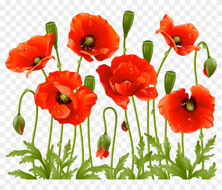 Tubes Fleurs Varies Pngservez Vous Poppy Flowers, Large - Poppy Flowers Png Clipart #1106160