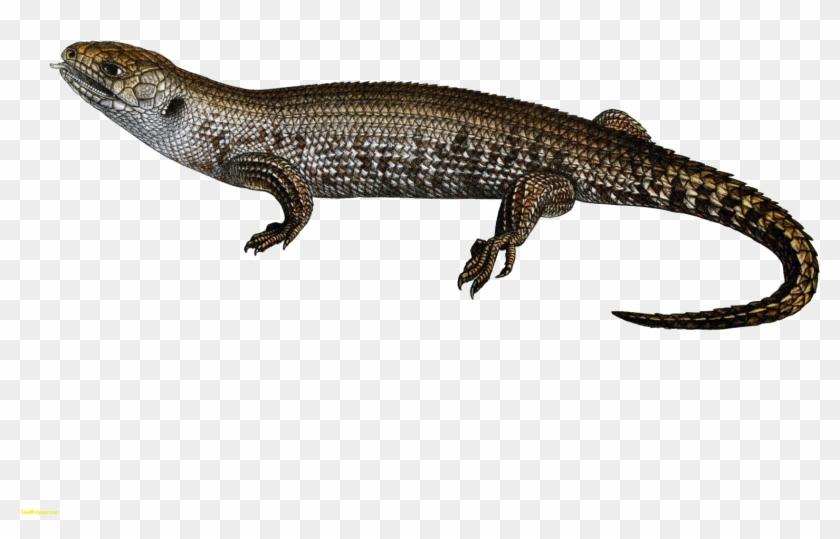 Lizard Transparent Clipart #1143720