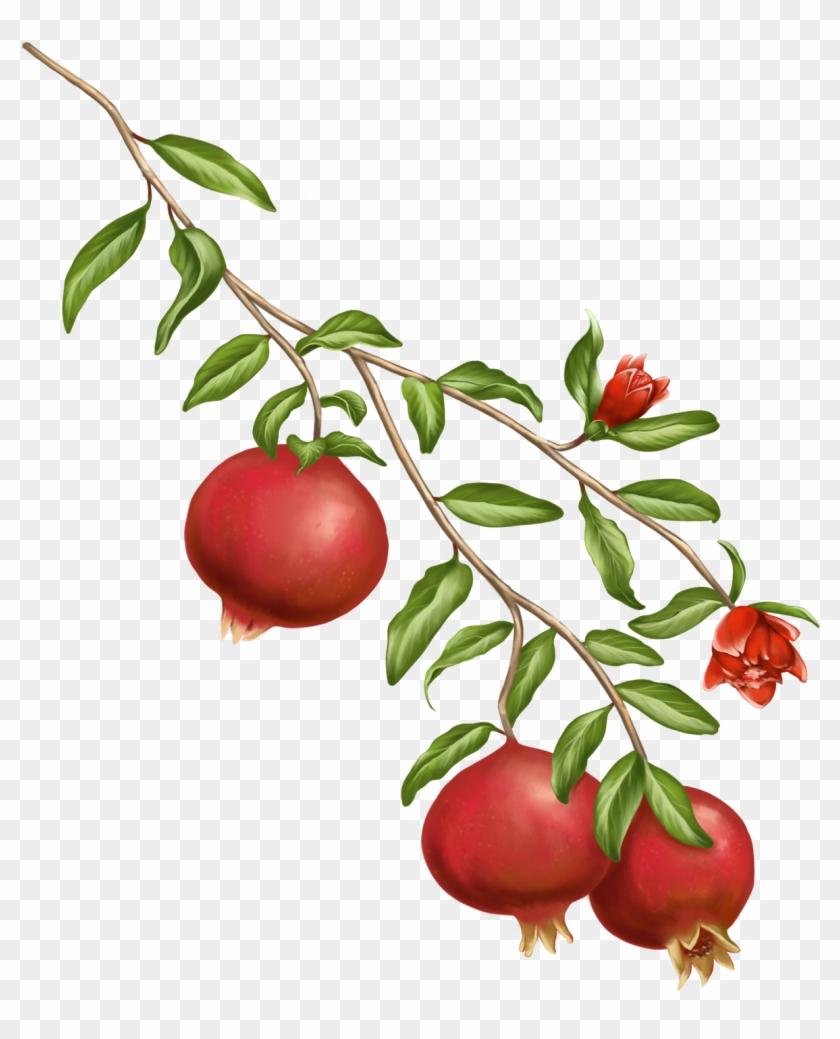 A Symbol Of The Gods In Greek Mythology, The Pomegranate - Pomegranate Plant Png Clipart #1156695