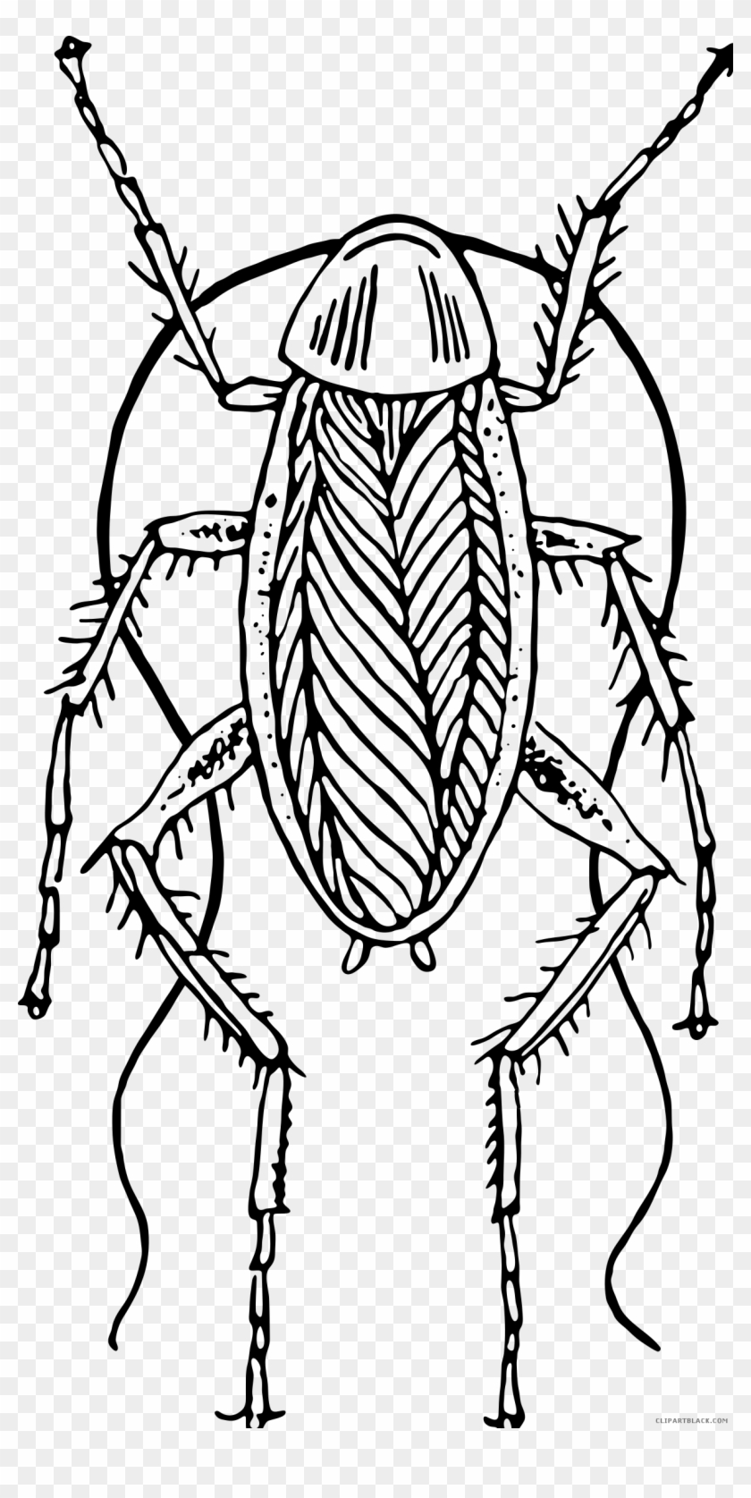 Cockroach Black And White - Cockroach Clipart Black And White - Png Download