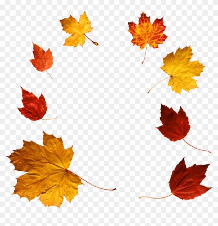 Free Png Download Autumn Leaves Clipart Png Photo Png - Autumn Leaves Real Png Transparent Png #1184274