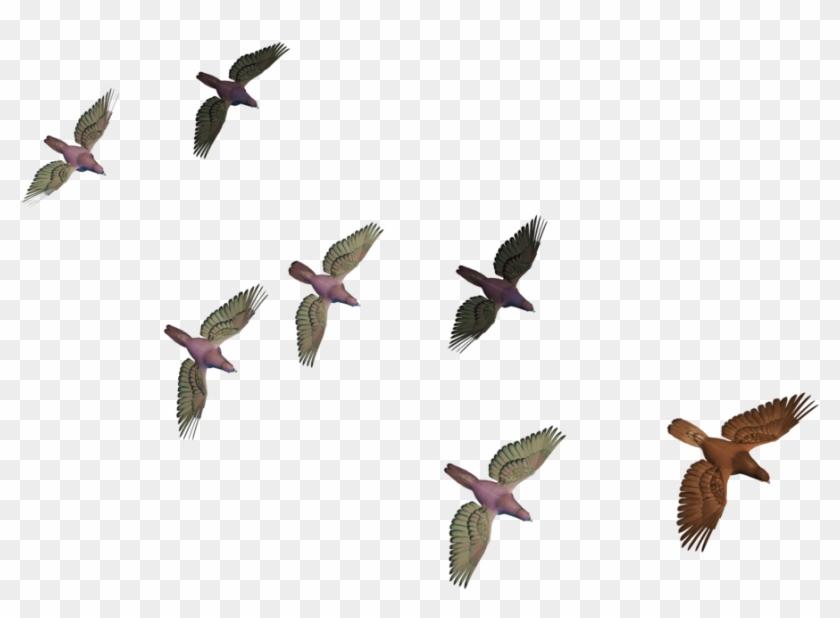 Flying Birds Png - Transparent Birds Flying Clipart #1198244