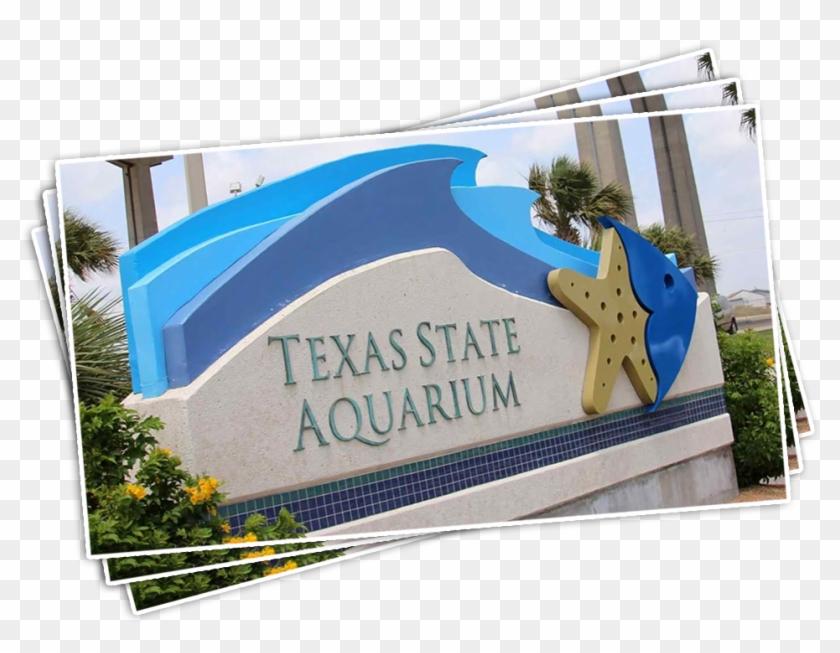 Texas State Aquarium - Acuario En San Antonio Texas Clipart #122997