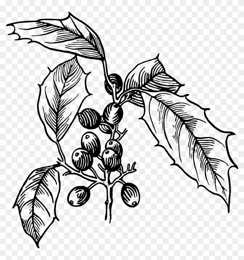 Holly Vector Clipart Image - Holly Vector - Png Download #1214178