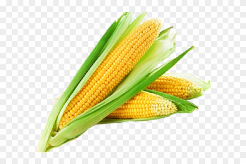 Corn Png Transparent Images - Sweet Corn Clipart #1218879
