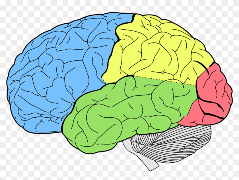 Brain Png High-quality Image - Lobes Of The Brain Clipart #1233344