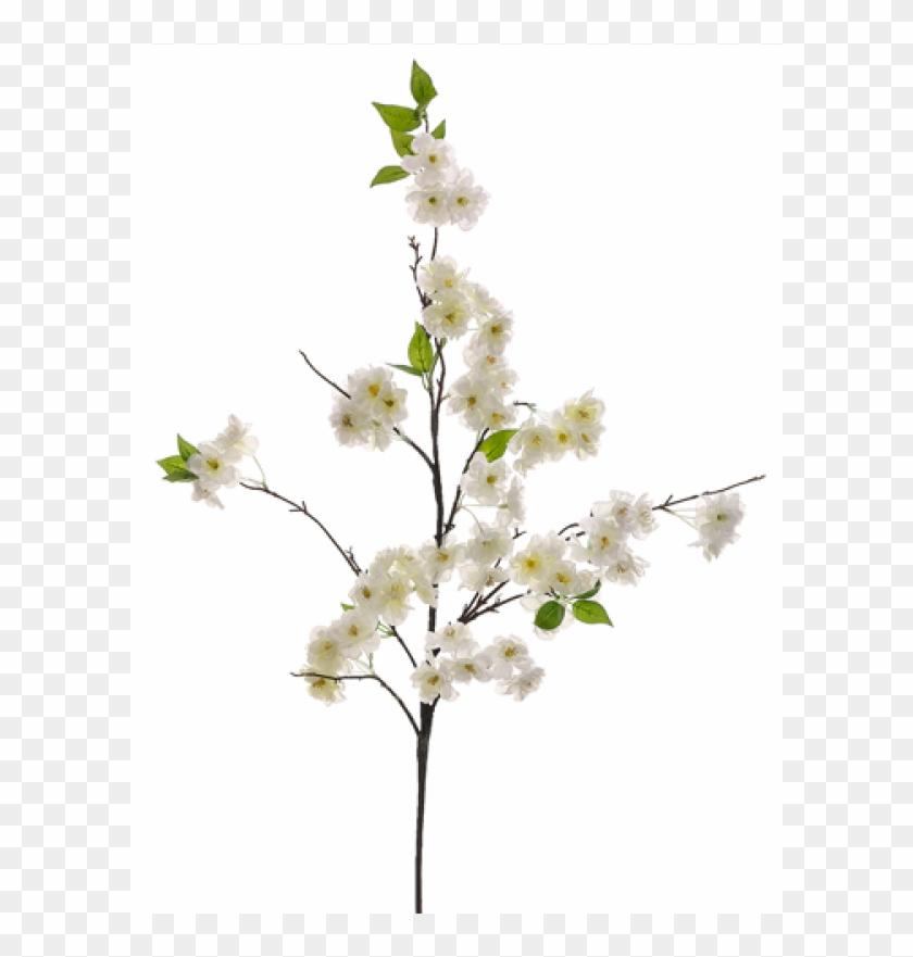 "50"" Cherry Blossom Spray White - Cherry Blossom Clipart #1268311"