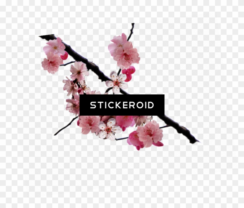 Cherry Blossom Flower - Editing We Heart It Overlay Png Clipart #1275391