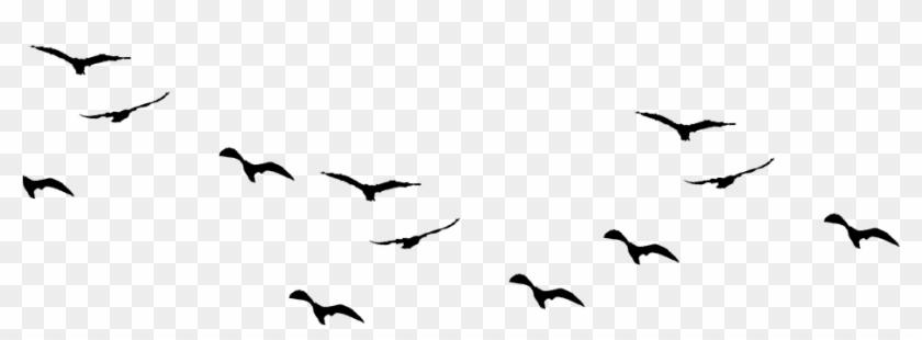 Birds-960x876 - Flock Clipart #132077