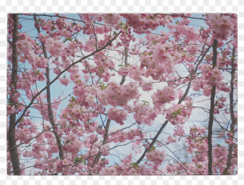 Cherry Blossom Tree Glass Cutting Board - Hola Mayo Clipart #135476