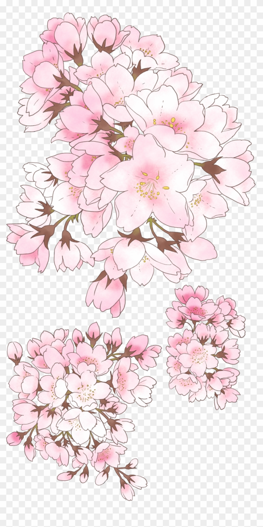 09 Anime Cherry Blossom, Tree Illustration, Botanical - Anime Cherry Blossom Drawing Clipart #135999