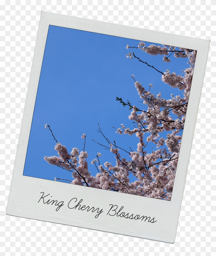 One Thing That Was Lacking From The Festival Was Food - Cherry Blossom Clipart #136229