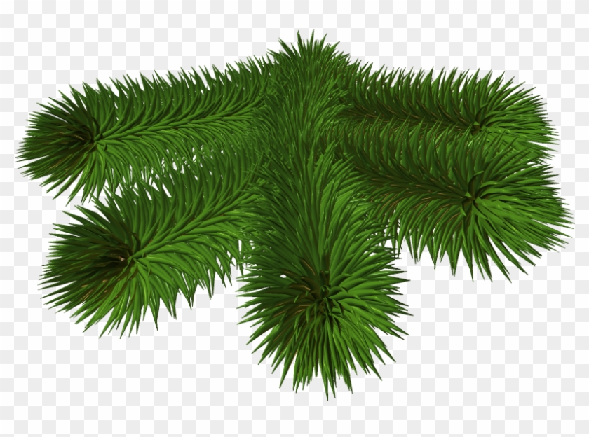 Transparent Background Pine Branch Png Clipart #1300951