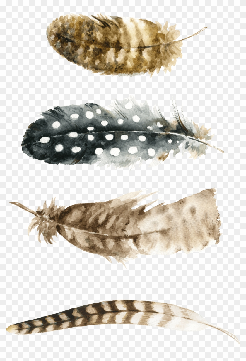 Free Printable Feathers Prints Free Printable Feather Wall Art Clipart 1326199 Pikpng