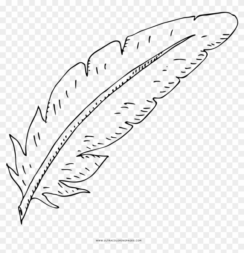 Coloring Pages Feather Coloring Pages Splendiree Printable - Line Art  Clipart (#1395396) - PikPng