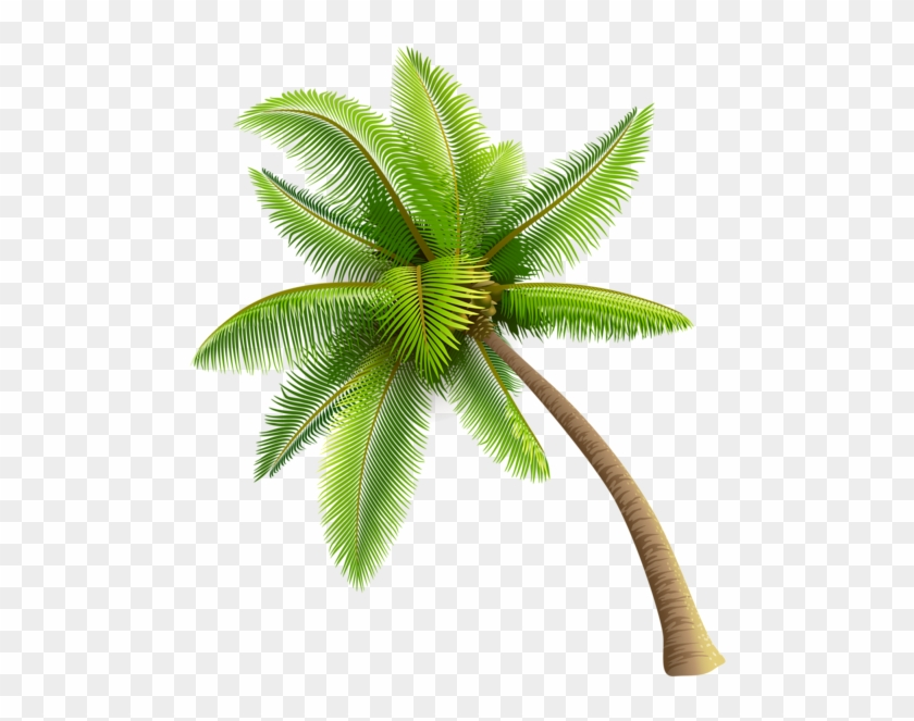 Clipart Coconut Tree Vector Png - រូបភាពប្លុក | Images (840 x 663 Pixel)