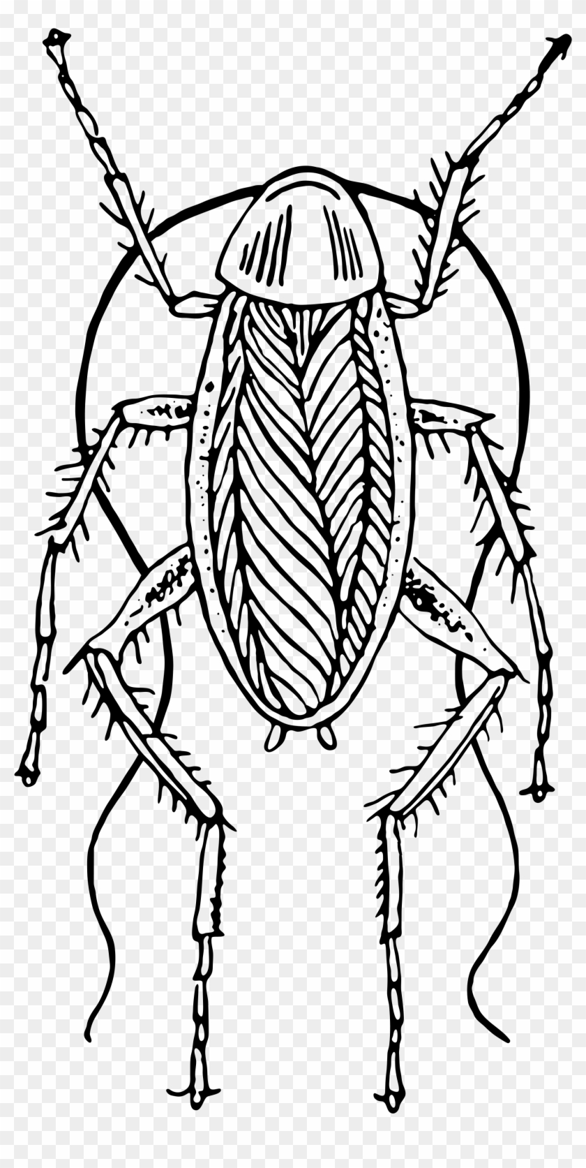 2000 X 3890 6 - Cockroach Black And White Png Clipart #144997