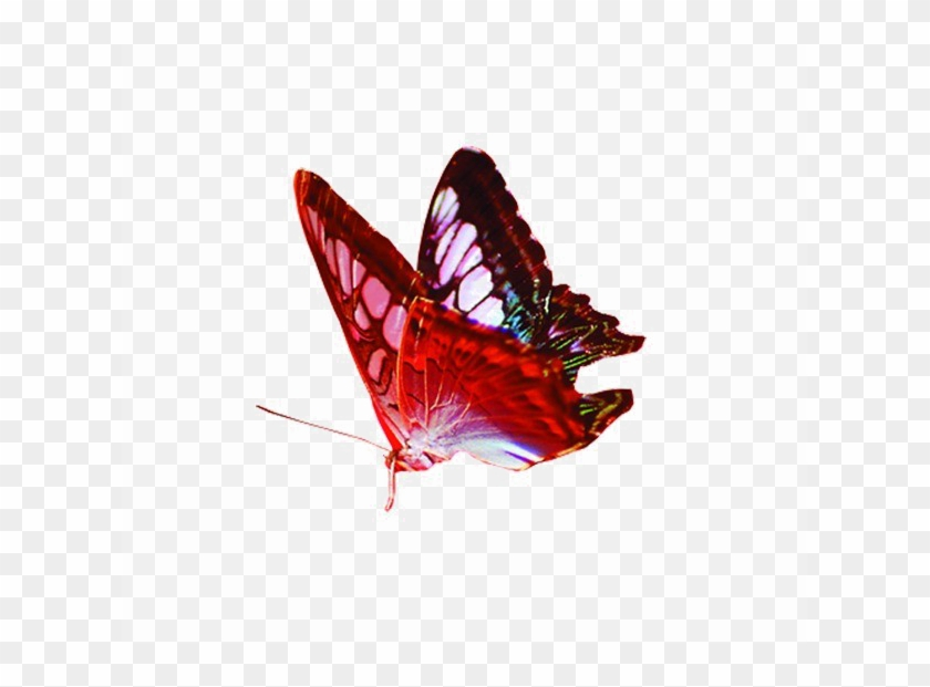 Red Butterfly Png Image Background Transparent Background Png Image Butterfly Clipart 1409929 Pikpng