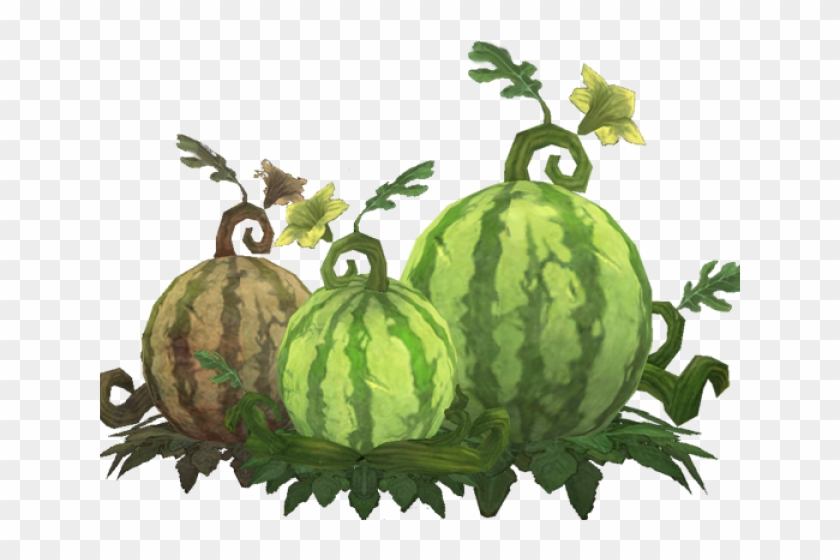 Cantaloupe Clipart Cucumber Melon - Watermelon Plant Clipart Png Transparent Png #1506941
