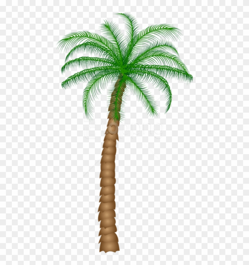 Free Png Download Palm Tree Png Images Background Png - Real Palm Tree Transparent Background Clipart #1514504