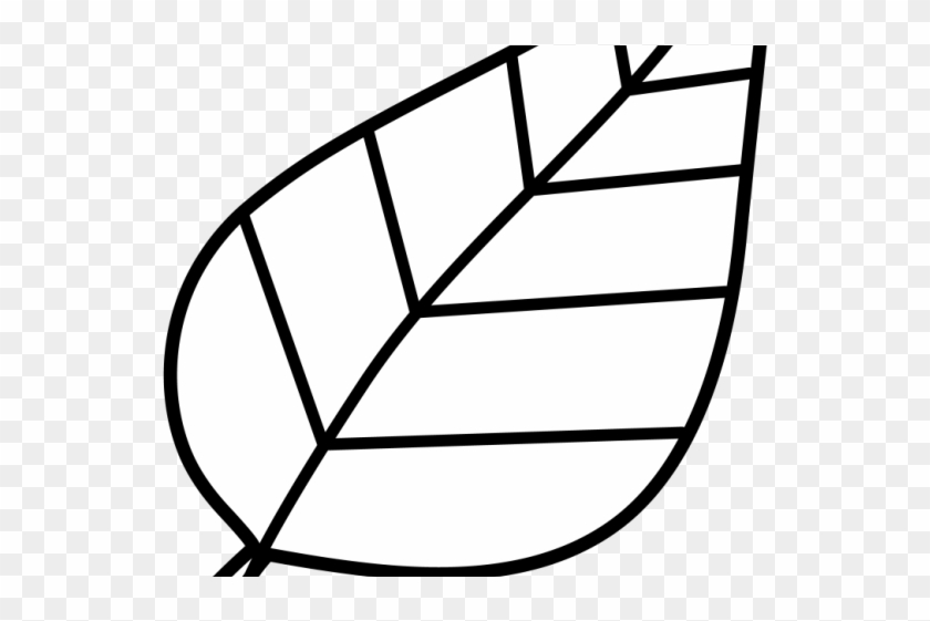 Leaf Outline Cliparts - Leaf Clipart Images Black And White - Png Download@pikpng.com