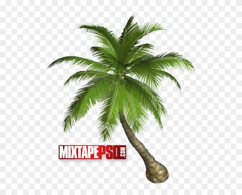 Palm Tree - Palm Tree Transparent Clipart #1573515