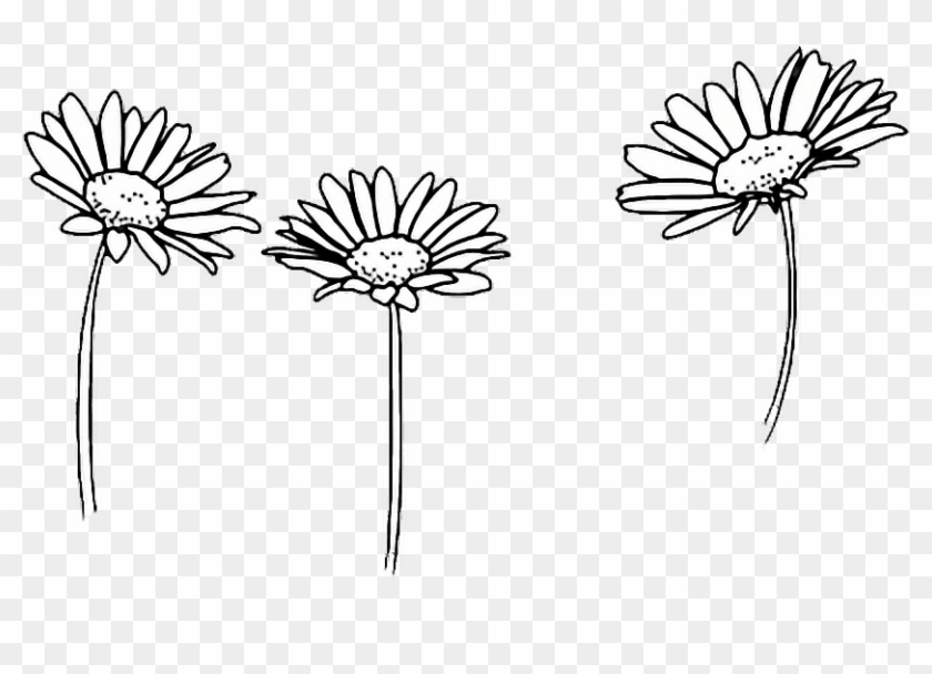 Comfortable Drawing Outline Sunflowers Black And White Doodles Flowers Clipart 1660924 Pikpng The best selection of royalty free sunflower outline vector art, graphics and stock illustrations. black and white doodles flowers clipart