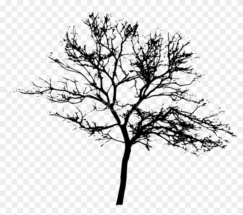 Free Png Tree Silhouette Png Images Transparent - Tree Silhouette Transparent Background Clipart@pikpng.com