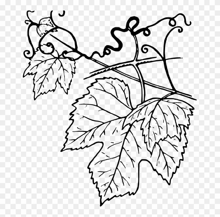 Common Grape Vine Leaf Grape Leaves Clipart Grape Leaves Black And White Png Download 1686005 Pikpng