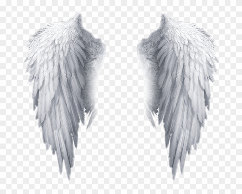 Popular And Trending Feather Stickers On Picsart - Transparent Background Angel Wings Png Clipart #173868