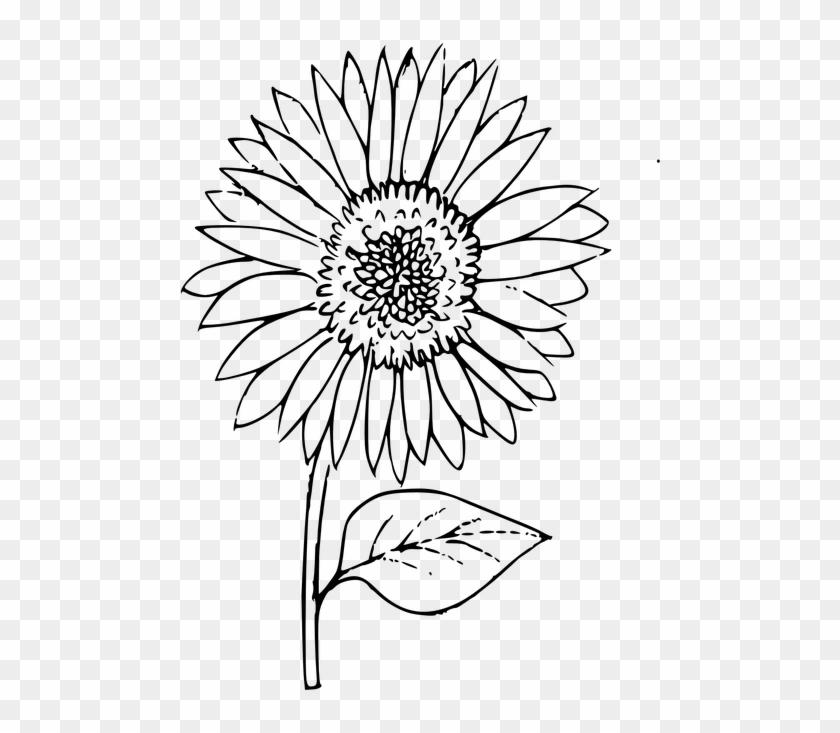 Sunflower Outline Clipart@pikpng.com