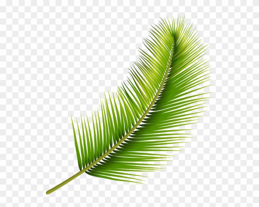 Palm Leaf Png Transparent Image Pond Pine Clipart 1703727 Pikpng Download 4,096 tropical leaves free vectors. palm leaf png transparent image pond